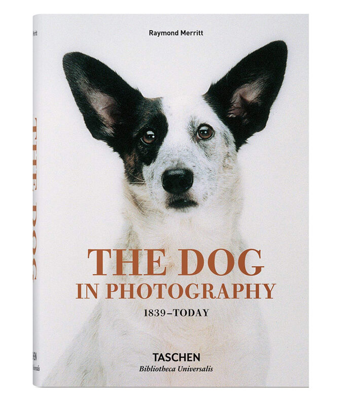 Gandhi The Dog in Photography 1839-Today, , large